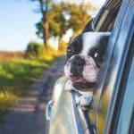 Chien en voiture : Les bons réflexes à prendre !