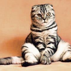 Comment s'assurer que d'autres chats n'empruntent la chatière de mon chat ?