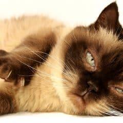 Absence de quelques jours, avez-vous pensé au distributeur de nourriture et d'eau pour le chat?