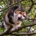 Arbre chat ou simple griffoir, que choisir?