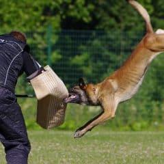 Dressage canin: comment y arriver sans payer une fortune ?