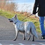 Un comportementaliste pour chien est-ce efficace ?