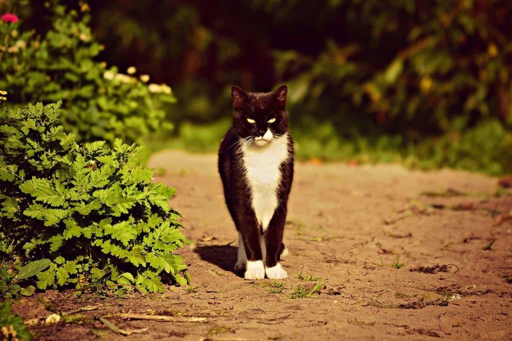 Chat noir en attente