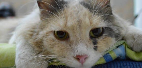 4 astuces pour diminuer le stress de votre chat d'appartement