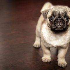 5 façons d'aider à se débarrasser des gaz de son chien