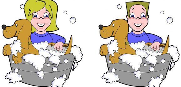 Devenir Toiletteur pour Chiens – Fiche métier et Salaire