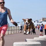 Pourquoi pratiquer du sport avec son chien?