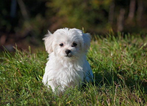 Pourquoi adopter une alimentation sans céréale pour mon chien ?