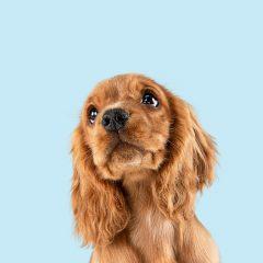 Pourquoi choisir des croquettes pour chien sans céréales ?