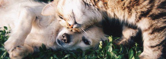 Les bonnes raisons de faire assurer son animal de compagnie !