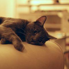 Comment Faire en Sorte que votre Chat arrête de Griffer vos Meubles ?