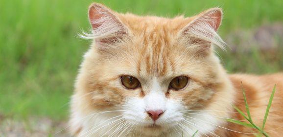 Choisissez des aliments vraiment appropriés pour votre chat