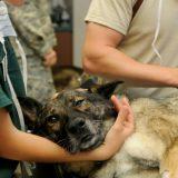 Un vétérinaire peut intervenir en urgence pour soigner vos animaux