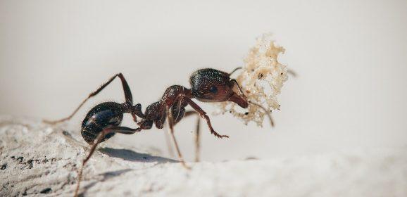 5 espèces de fourmis super intéressantes à observer